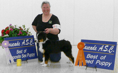 Mystic - Best of Breed Puppy am show, Best Opposite Sex Puppy pm show
