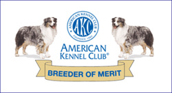 AKC Bredder of Merit