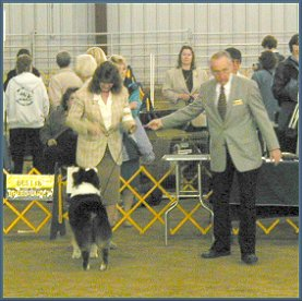 Liam wins Best of Breed 4/12/03