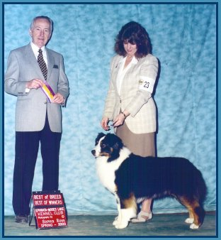 4/12/03 AKC Best of Winners - Best of Breed