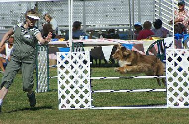 Rusty at Agility